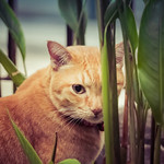 We can still see you, Joey! 😸 thumbnail