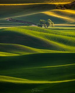 Lone Tree Sunset - Palouse, Washington