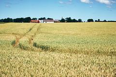 Landskrona - Ven, Sweden (July 2018) (Guill_B) Tags: europe suède se swe sweden skåne landskrona ven île island ön landskronaven