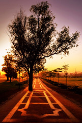 Past the hindrance (رحم) Tags: path walkway tree garden park morning sunshine sunlight ciel glow golden
