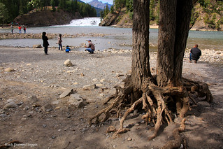 Eroded Tree Roots, the Bow River Falls, with Cascade Mountain behind, Banff, Alberta, Canada