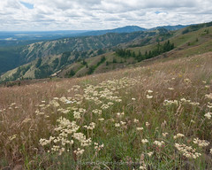 Roadside view (jamesdelbertanderson) Tags: umatillanationalforest washington bluemountains wildflowers inlandnorthwest easternwashington