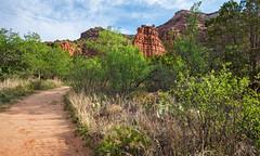 Upper Canyon Trail, Caprock Canyons State Park, Texas (Rick Knepper) Tags: fujifilmgfx50s gf23mmf4rlmwr