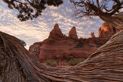 Wavy Frame (Darkness of Light) Tags: sedona arizona golden hour tree frame sony a7r2 zeiss batis 18mm f28 nuns cathedral peaks holy cross chapel broken arrow trail chicken point overlook redrock