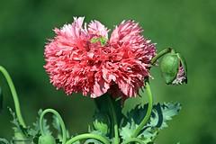 J78A0734 (M0JRA) Tags: flowers plants walks birds woods weeds gardens forest fields