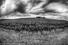 365-190.jpg (rustyuglythings) Tags: corn bw 365 sky monochrome fisheye farm wisconsin hdrefexpro2 hdr