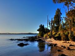On the island V (elphweb) Tags: hdr highdynamicrange nsw australia seaside sea ocean water forest bush tree trees wood woods beach sand sandy brouleeisland island rock rocks rockformation