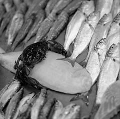 Kowa Six TMAX 400 Istanbul fish f (shakmati) Tags: id11 lford film bnw bw ภาพเหมือน slr filma portra 肖像 ritratti portrét bild porträt портрет retrato portrait blanc blanco monochrome black white shiro negro nero street travel istanbul turkey kowa six 6 110mm medium 120 moyen acros fuji