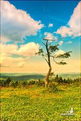 Lonely Tree (ARTSHOT - Photographic Art) Tags: baum fichtelberg deutschland landschaft natur malen look berge wald hügel ausblick panorama outlook hill forest mountains topaint nature landscape germany tree