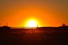 The suns golden glow (darletts56) Tags: sky orange peach yellow gold golden white sun sunset evening night dusk fence field fields prairie saskatchewan canada farm equipment grass green red tree trees hill dust dusty