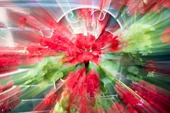 Summertime Zoom-Burst Red (happad fotografie) Tags: flowers colorful bright sunny vibrant nikon d610 nikkor green zoom zoomburst burst plants bloemen planten groen contrast summer