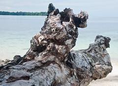 DSC_0146 (yakovina) Tags: silverseaexpeditions indonesia papua new guinea island auri islands