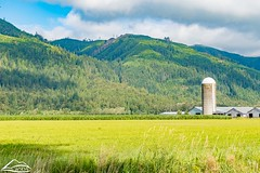 Farm scenery (Washington State Department of Agriculture) Tags: scenic summer washingtonstatedepartmentofagriculture barn farm july washington washingtongrown washingtonstate