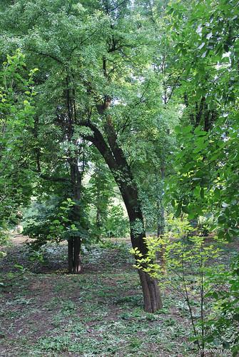 Аскольдова могила, Київ  InterNetri Ukraine 037
