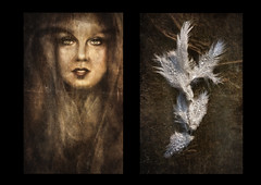 Angel feathers. (andredekok) Tags: feathers angels artwork diptych dewdrops textures