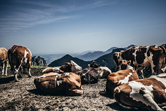 enjoy the view :)) (Frank KR) Tags: kuh cow ausblick bayern bavaria alm photo view viewpoint mountains berge
