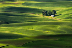Dreams (Stacy Brantley Photo) Tags: washington state palouse rolling hills farm green pacificnorthwest