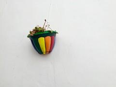 Maceta orgullosa en una calle andaluza (Micheo) Tags: iphone spain andalusia laherradura pared wall againstthewhite orgullo pride colours arcoiris rainbow