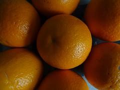Oranges (Wider World) Tags: orange fruit daisy stilllife shadow citrus