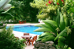 92404665 (bluehavenpoolsandspas) Tags: pool swimming tropical plants palm water bluehot summer lush greenery table chairs green backyard vacation patio lounge relaxation garden ornamental luxury recreational tourism deck leisure resort nature fun vacations joy travel outdoors landscaped