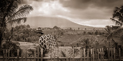 Men at work at Ricefield (Markus Jaschke) Tags: penebel bali indonesien id fuji xe3 sw bw sky himmel reis ricefield korb basket grass gras vulkan vulcano clouds wolken berg hill unesco world heritages worldheritages weltkulturerbe