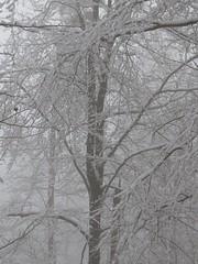 Le paradis blanc (ViveLaMontagne67) Tags: france vosges grandfaudé hiver brouillard neige arbres branches forêt forest trees snow fog winter white blanc
