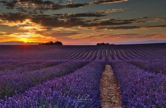 Sunset in Provence (Andrea Rizzi photo) Tags: sunset provence provenza francia travel canon canoneos landscape landscapephotography nature naturephtography colors colours summer flowers photo picture naturalmente sun sky flickr flickrnature paesaggio beatifulnature light beatifullight