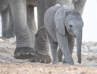 Little One Leads the Way