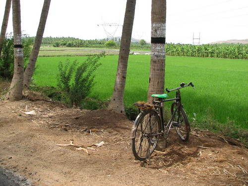 Rice Fields 2
