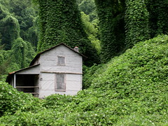 Engulfed (Jacob...K) Tags: house overgrown rural america decay south ivy vine southern americana appalachian reclaimed tarpaper kuzu appalchia