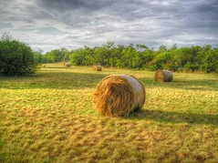 HAY BALES NEAR TRIESTE (mariotto52) Tags: summer italy nature topf25 grass clouds wonderful landscape ilovenature effects golden landscapes topv555 scenery italia extreme sunny views hay bales hdr 1000 trieste friuli elaboration panorami paisagen triestini photomatix tonemapping triestino specnature mariotto52