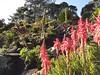 Succulent garden (sitharus) Tags: newzealand flower succulent raw wellington e300 botanicgardens