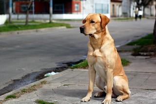 Cute dog..