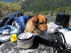 Ansel Adams Wilderness (16) (mfullerton) Tags: adams wilderness ansel
