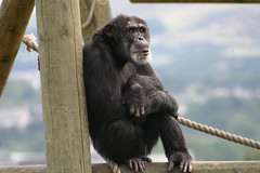Edinburgh Zoo (Cory') Tags: animals zoo monkey scotland edinburgh animalkingdomelite