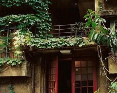 aoyama3 (gracias!) Tags: green film japan architecture tokyo pentax ivy aoyama omotesando mz5 表参道 dojunkaiapartment 同潤会青山アパート