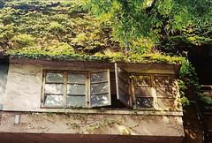 aoyama8 (gracias!) Tags: green film window japan architecture tokyo pentax ivy aoyama omotesando mz5 表参道 dojunkaiapartment 同潤会青山アパート