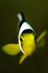 Threat (keddu) Tags: new water guinea underwater photos under diving photograph papua ダイビング 水中写真 alotau milnebay