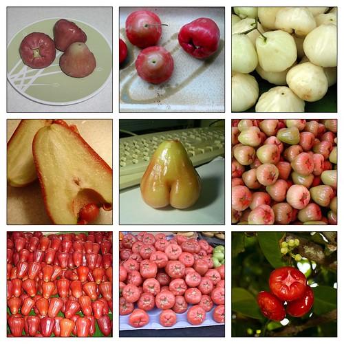 apple 245171751_092b8a4fa4
