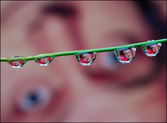 Drops of Art* (Steve took it) Tags: drops nikon norton d200 waterdrops nikkor60mm artcarney aplusphoto