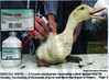 birdflu_H5N2 (pfhorgl) Tags: propaganda birdflu hoax scaremongering h5n2