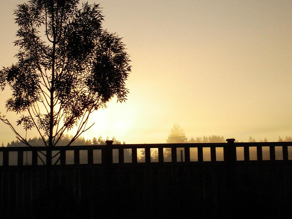 Bothell morning fog