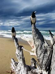 watching & waiting (*omnia*) Tags: ocean sea two beach birds delete5 delete2 coast seaside