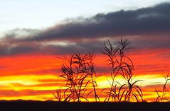 Sunset Sweeping Across, A Vista (cobalt123) Tags: sunset red arizona sky orange tree leaves silhouette yellow catchycolors skyscape colorful vivid stark foreground highway90 nearsierravista orangeset