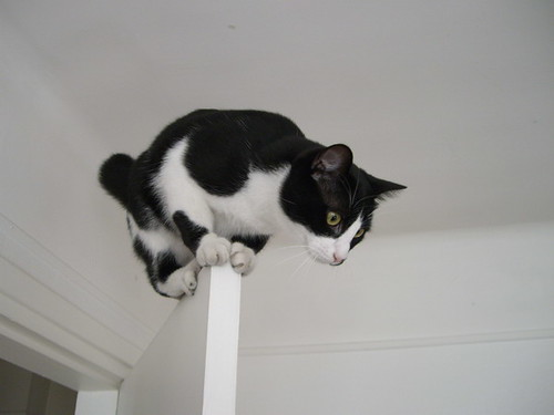 On top of the door!