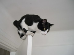 On top of the door! (isazappy) Tags: cute cat kitten chat kitty isabelle chataigne chatouille cc100 kissablekat isazappy cv97october162006 pet500