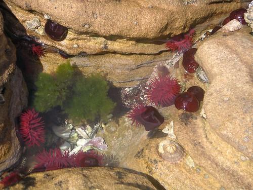 Tide Pool, Painted Cliffs, Maria Island