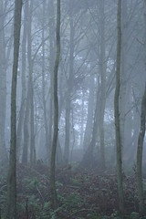 Misty Woods Closeup (ajnabeee) Tags: trees mist misty scotland woods dundee angus scottish atmosphere monikie tayside tranquil supershot