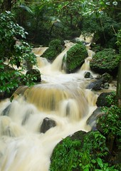 Cascada (kotobuki711) Tags: green water forest flow waterfall rainforest rocks puertorico rush elyunque