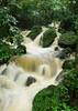 Cascada (kotobuki711) Tags: green water forest flow waterfall rainforest rocks puertorico rush elyunque